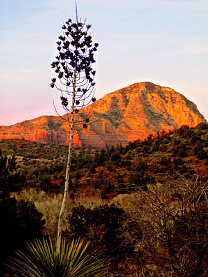 Photograph - Dusk Solitude In Sedona by Cindy Wright
