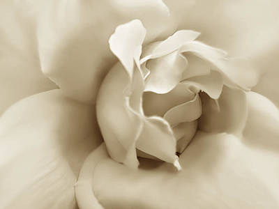 Photograph - Dusty Sepia Rose Flower by Jennie Marie Schell