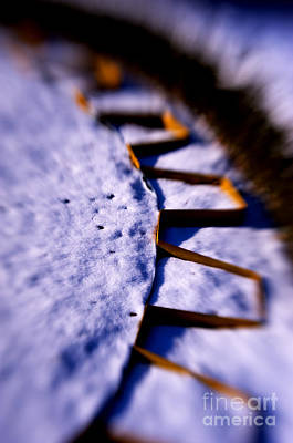 Photograph - Dusty Snow And Geometry Third View by Anca Jugarean