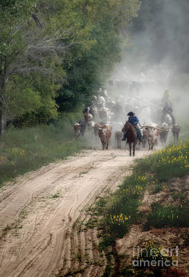 Cattle Drive Photograph - Dusty Trail - Color by Fred Lassmann