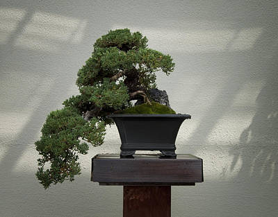 Nana Photograph - Dwarf Japanese Garden Juniper by Bill Cannon