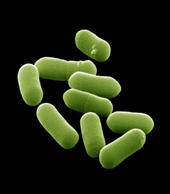 E. Coli Bacteria, Sem Art Print by David Mccarthy