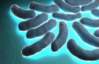 Biomedical Illustration Digital Art - E-coli Cells by MedicalRF.com