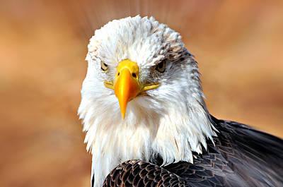 Eagle 21 Art Print by Marty Koch