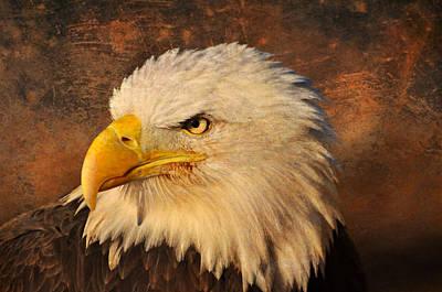 Eagle 47 Art Print by Marty Koch