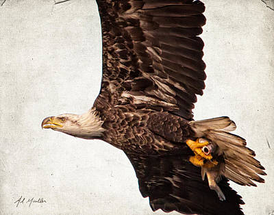 Photograph - Eagle And Fish by Al  Mueller