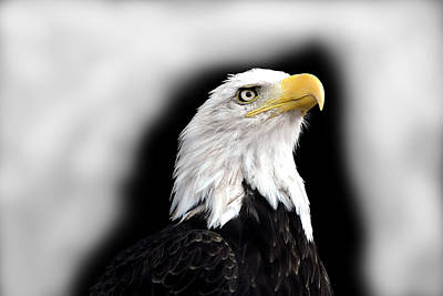 Eagle Art Print by Barry Shaffer
