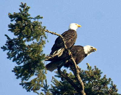 Photograph - Eagle Conversation by Kate Lynch