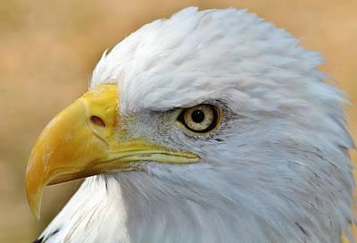 Eagle Eye 2 Art Print by Alexander Spahn