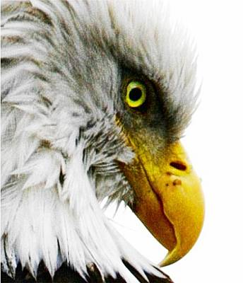 Eagle Eye Art Print by Carrie OBrien Sibley