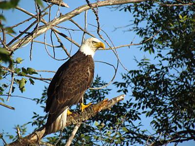 Photograph - Eagle Eye by Christine Hafeman