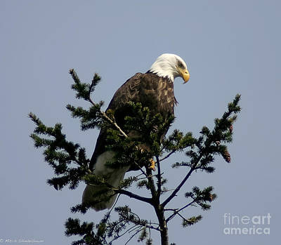 Art Print featuring the photograph Eagle Eye Vista by Mitch Shindelbower