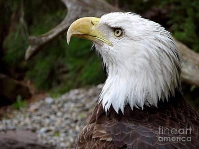 Photograph - Eagle Eyes by Eva Kaufman