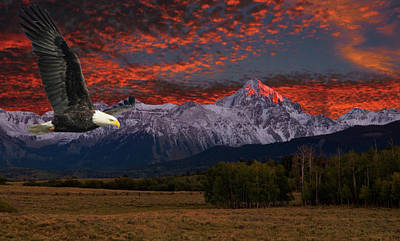 Eagle Photograph - Eagle Fantasy by Steve Stuller