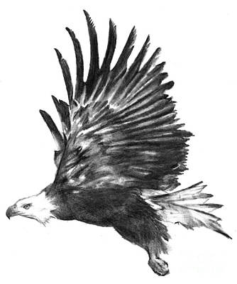 flying eagle drawings page 2 of 2 fine art america