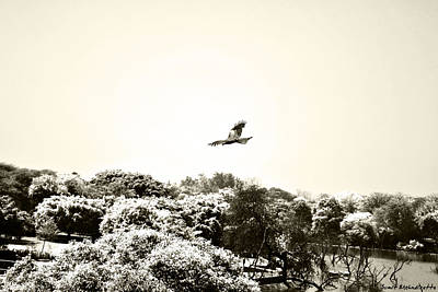 Flight Photograph - Eagle Flying Above The Forest by Sumit Mehndiratta