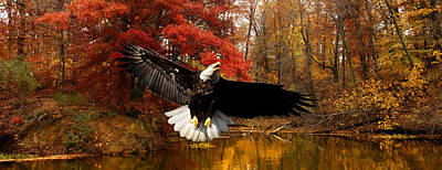 Art Print featuring the photograph Eagle In Autumn Splendor by Randall Branham