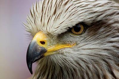 Eagle Art Print by Javier Balseiro