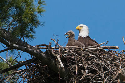 Eagle Nest Art Print