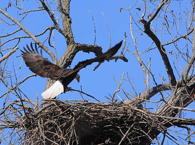 Photograph - Eagle Nest Landing by Coby Cooper