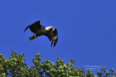 Art Print featuring the photograph Eagle Over The Tree Top by Randall Branham