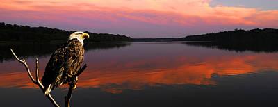Priska Wettstein Pink Hues - Eagle overlooking domain by Randall Branham