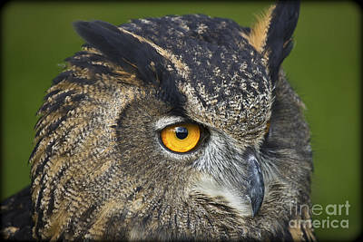 Eagle Owl 2 Art Print by Clare Bambers