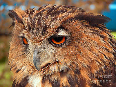 Photograph - Eagle Owl by Graham Taylor