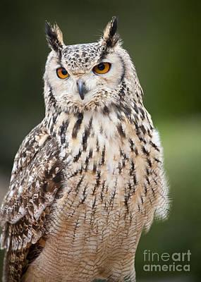 Photograph - Eagle Owl I by Chris Dutton