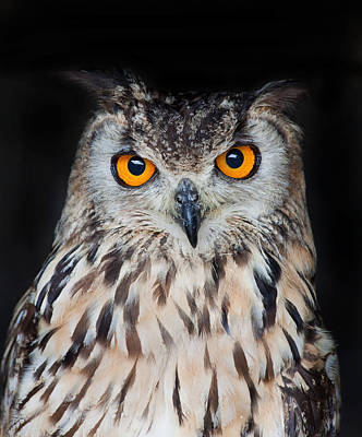 Photograph - Eagle Owl by Ian Merton