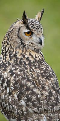 Photograph - Eagle Owl Iv by Chris Dutton