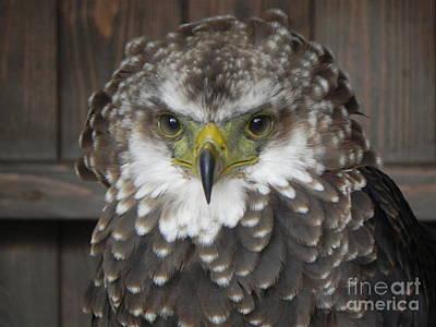 Eagle Owl Art Print