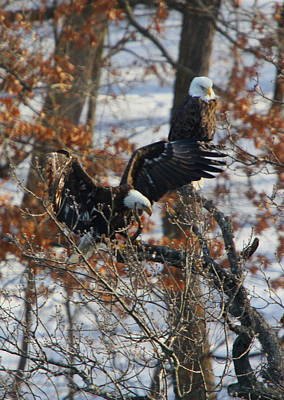 Photograph - Eagle Pair by Coby Cooper
