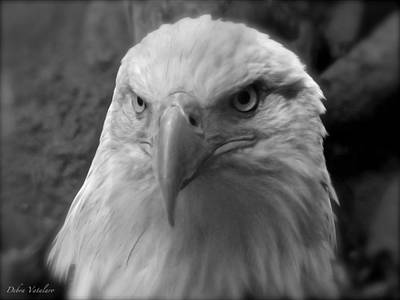 Eagle Portrait Art Print by Debra     Vatalaro