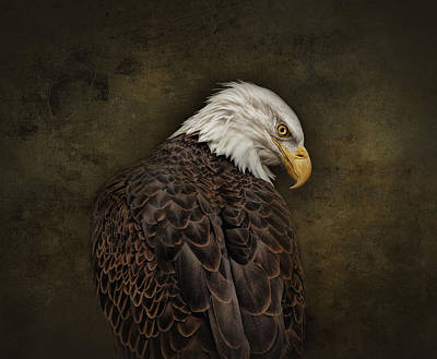 Eagle Profile Art Print