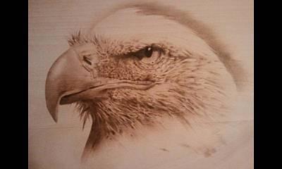 Pyrography Pyrography - Eagle by Rodney Balderas