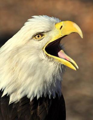 Eagle Squawk Art Print by Marty Koch