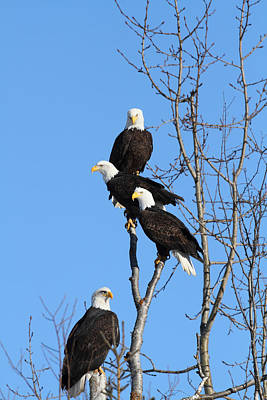 Photograph - Eagle Tree by Doug Lloyd