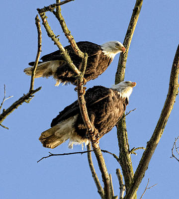 Photograph - Eagle Watchers by Lawrence Christopher