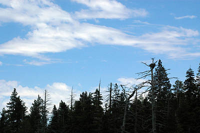 Eagle Painting - Eagles Nest Lake Tahoe by LeeAnn McLaneGoetz McLaneGoetzStudioLLCcom
