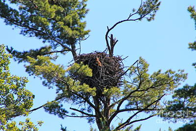 Photograph - Eagles Nest by Pamela Walrath