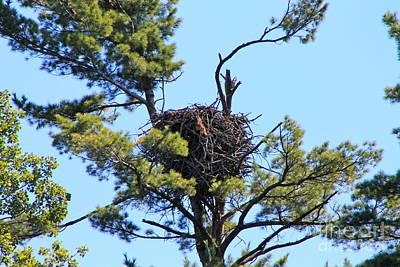 Photograph - Eagles Nest by Pamela Walrath