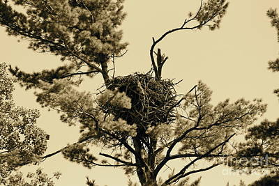 Photograph - Eagles Nest Sepia by Pamela Walrath