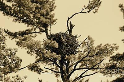 Photograph - Eagles Nest Sepia by Pamela Walrath
