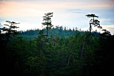 Photograph - Eagle's Perch by Eric Tressler