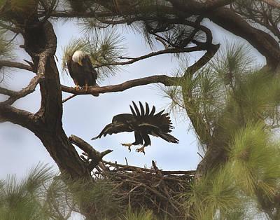 Eaglet First Flight Art Print by Joseph G Holland