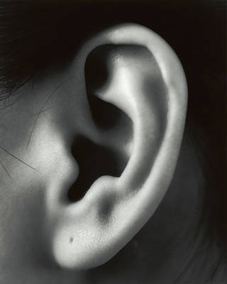 Pierced Ears Photograph - Ear by Cristina Pedrazzini