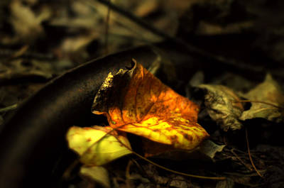 Photograph - Early Autumn Gold by Rebecca Sherman