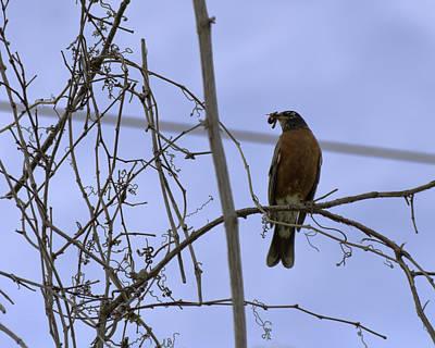 Robin Photograph - Early Bird Gets The Worm by LeeAnn McLaneGoetz McLaneGoetzStudioLLCcom