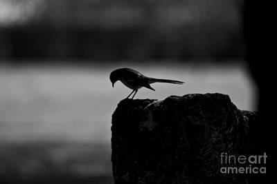 Photograph - Early Bird by Kim Henderson